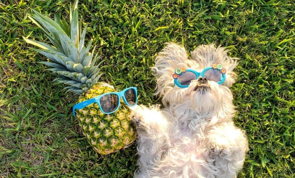 sunglasses-on-dog